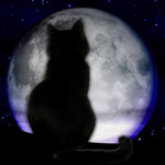 cat_moon